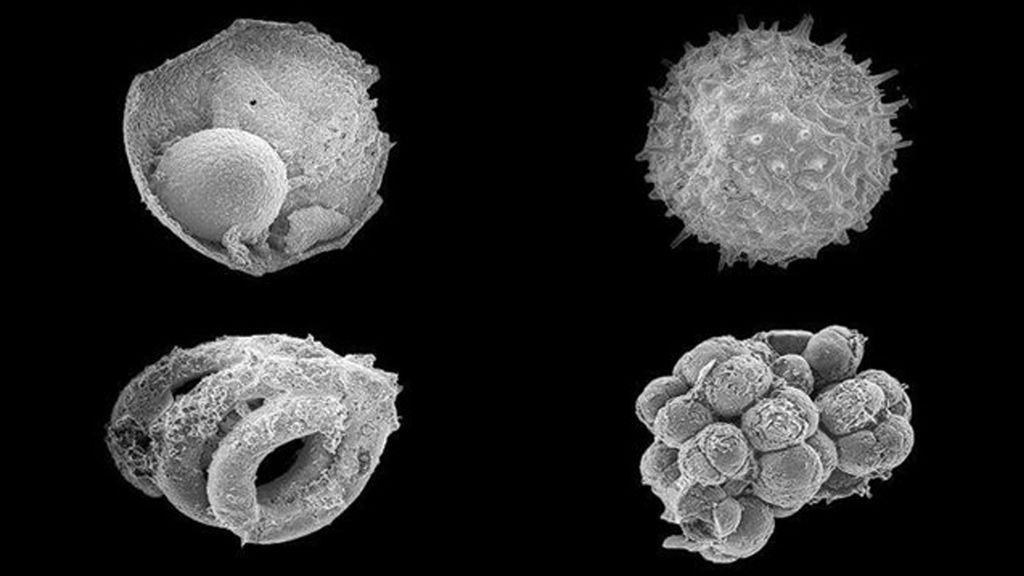 ¿Fueron éstos los primeros animales sobre la Tierra?