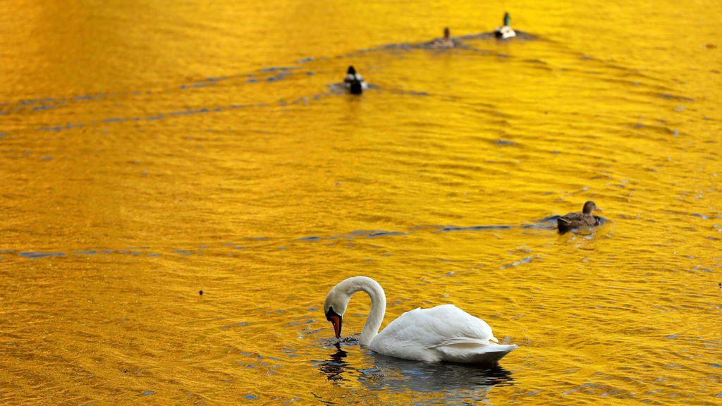 Hojas de colores otoñales se reflejan en el agua del lago Faskally