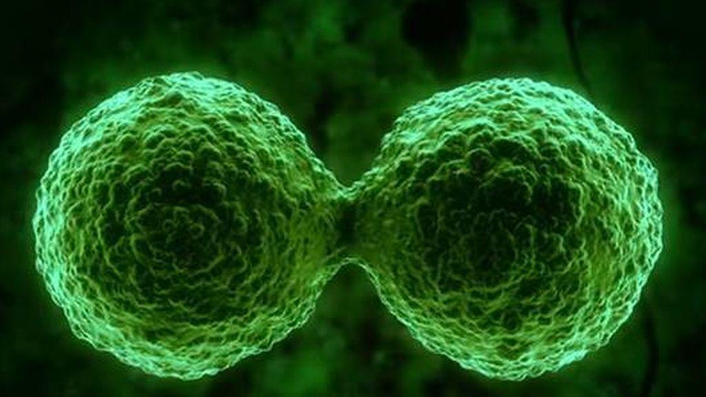 Detectado el primer brote de 'gripe simia' en San Francisco