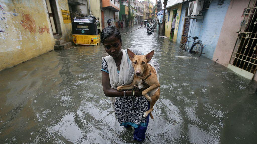Una mujer salva a su perro de las inundaciones en Chennai, India