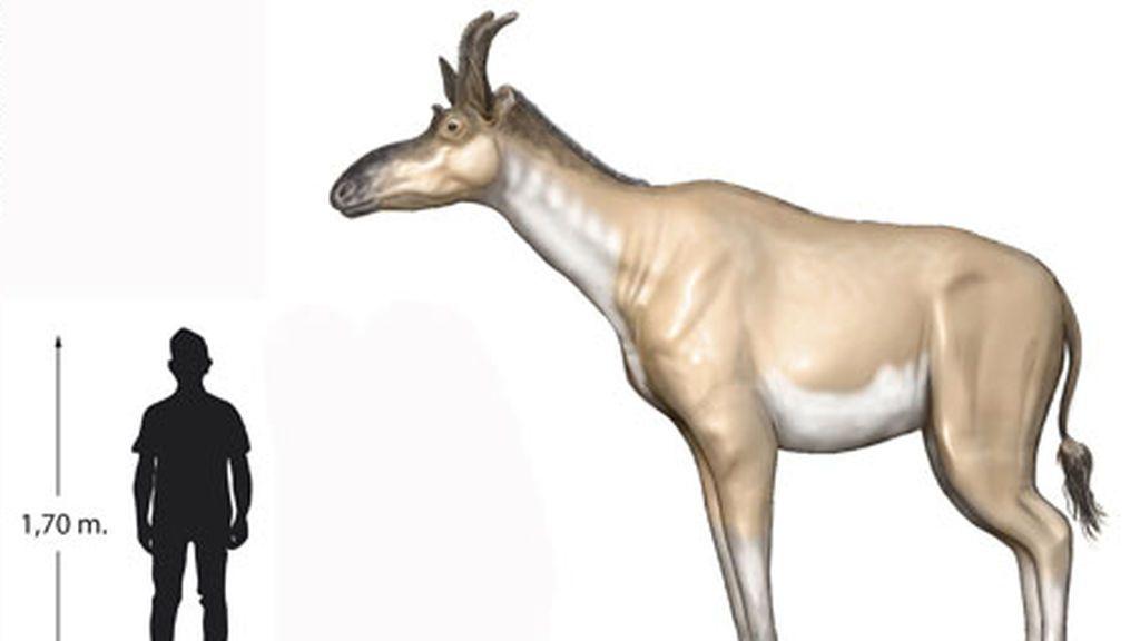 Una nueva especie de jirafa más pequeña que las actuales vivió en Madrid hace nueve millones de años