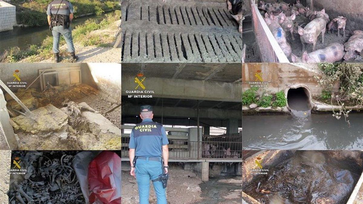 Investiga al propietario de una granja en Murcia por abandono animal