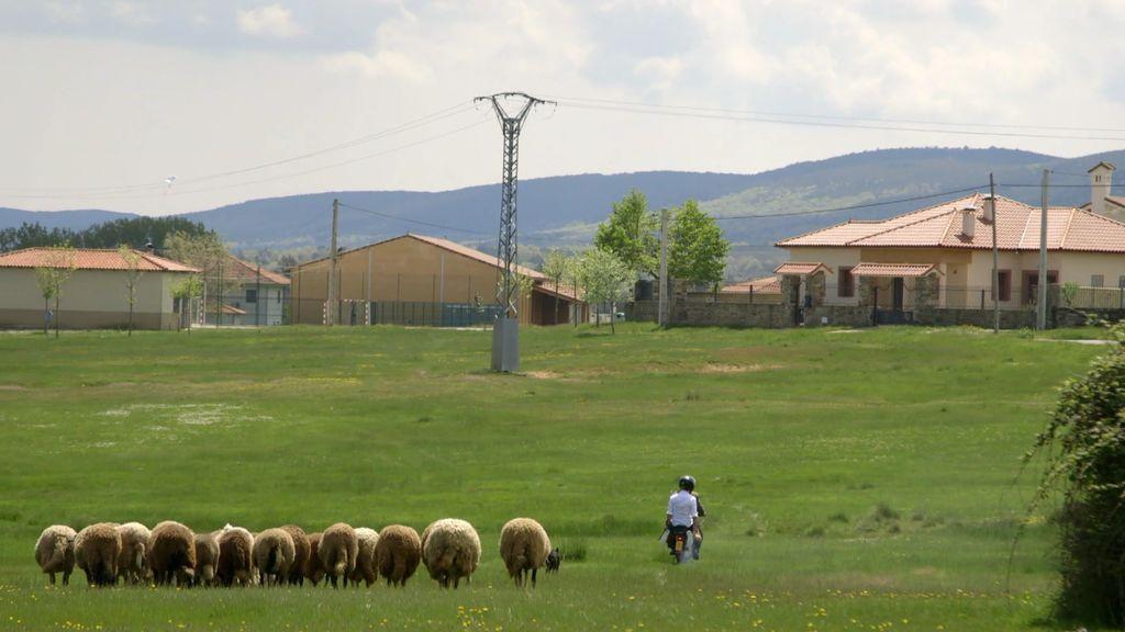 Pedro revoluciona con su nuevo método de pastoreo... ¡Lo hace en moto!