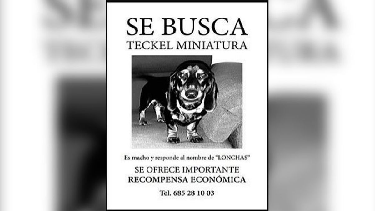 Un vecino de Alcalá ofrece 10.000 euros a quien encuentre a su perro 'Lonchas'