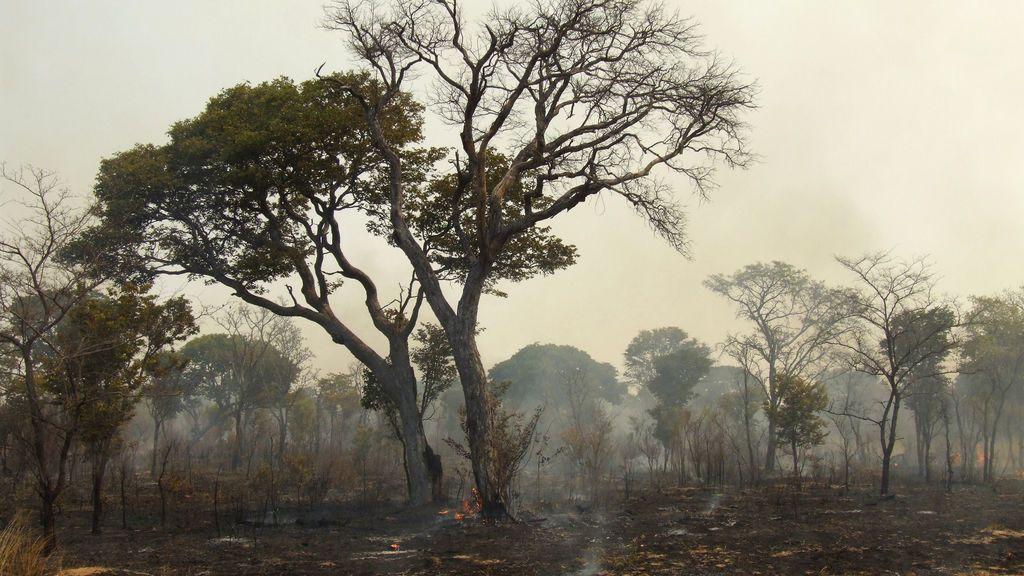 El 2017,  el más cálido que se conoce (y eso que no ha habido 'El Niño')