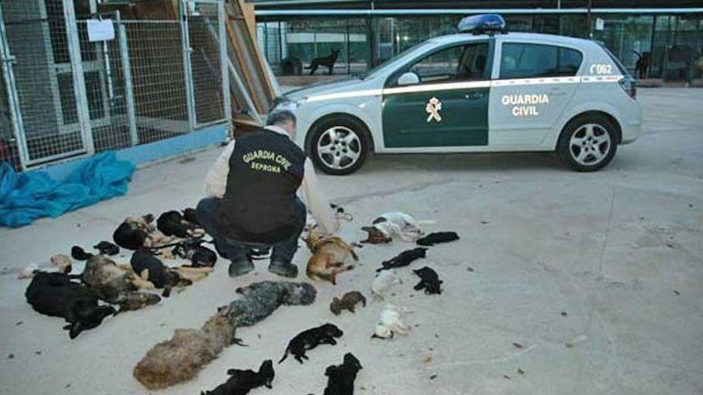 """La expresidenta de Parque Animal de Torremolinos irá a la cárcel por sacrificio """"masivo"""" de perros y gatos"""