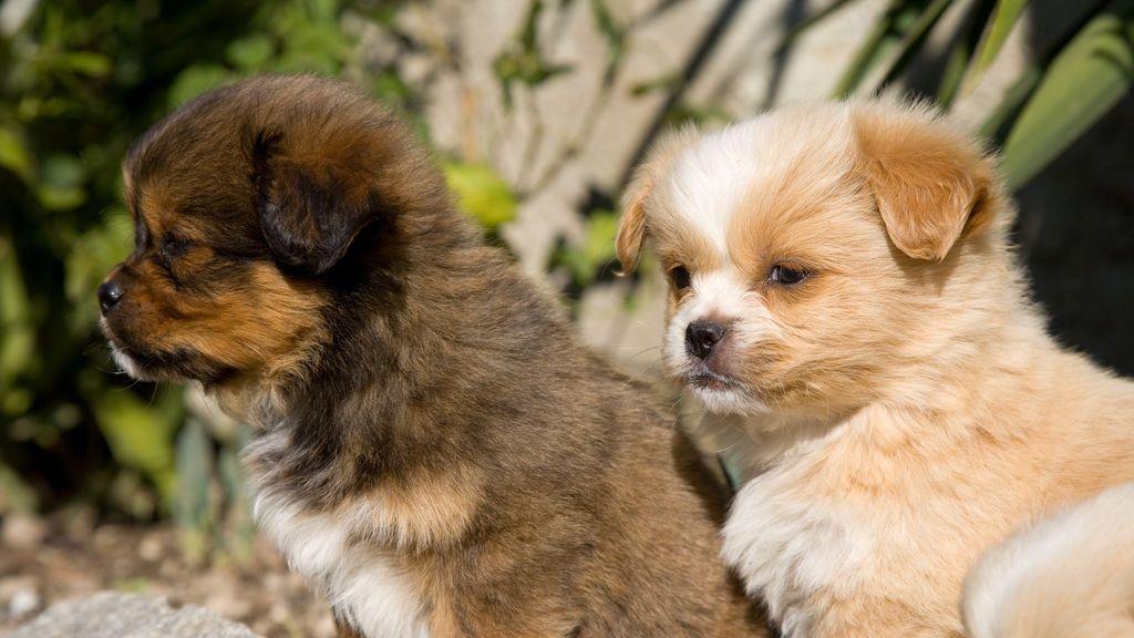 Una familia se salva de un incendio en su casa gracias a sus perros