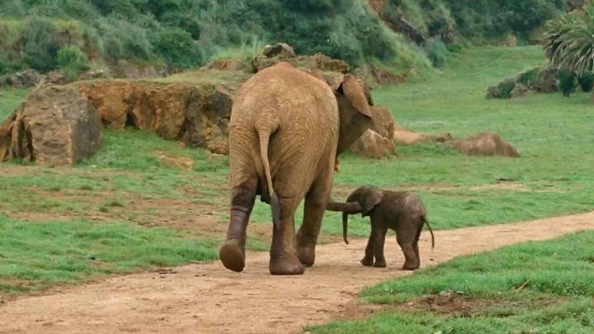 Mueren dos turistas aplastados por un elefante al que intentaban fotografiar en Zambia