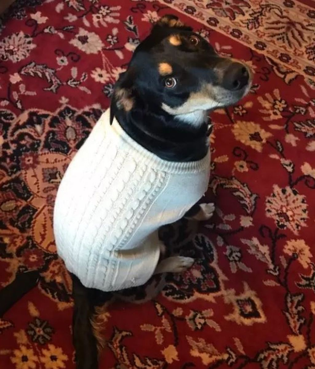 Este perro fingió estar enfermo para que sus dueños no fuesen a trabajar y se quedasen con él