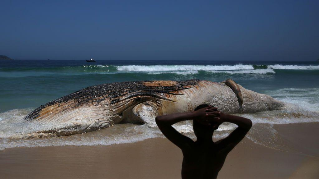 Una ballena aparece muerta en la orilla de la playa de Ipanema
