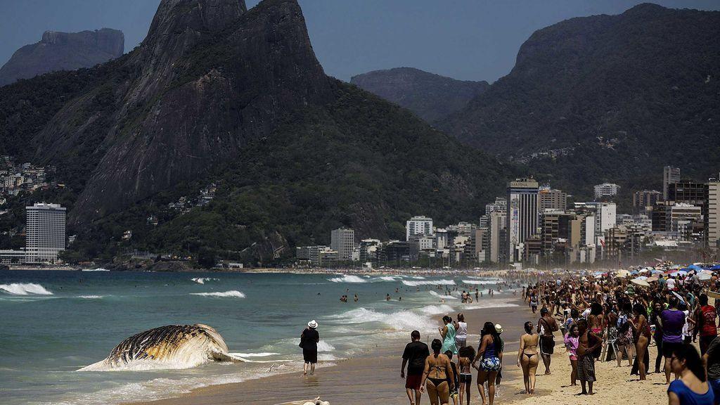 Una ballena muerta sorprende a los turistas de Rio de Janeiro