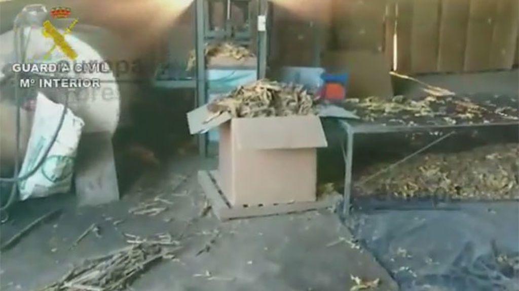"""La Guardia Civil realiza la """"mayor aprehensión de hojas de tabaco de Europa"""""""