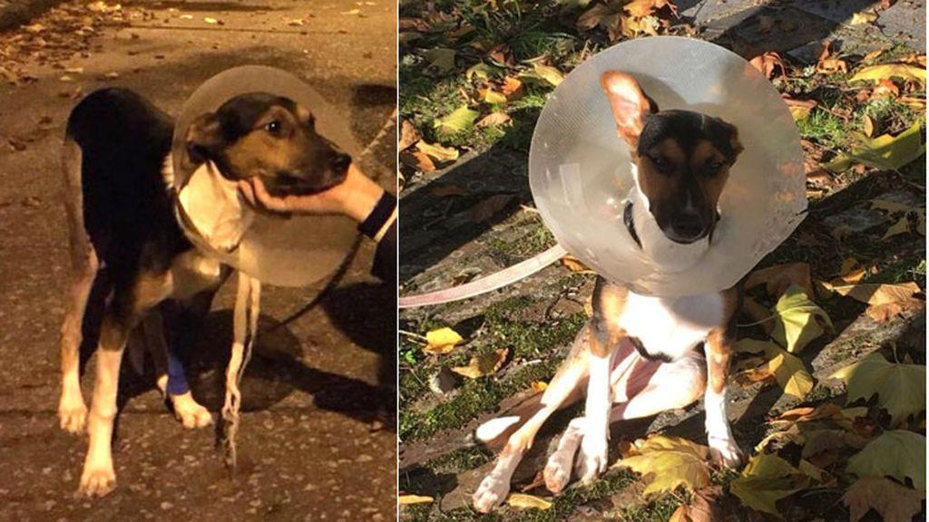 Una jueza dicta orden de alejamiento de su perra por lanzarla desde una ventana en Lugo