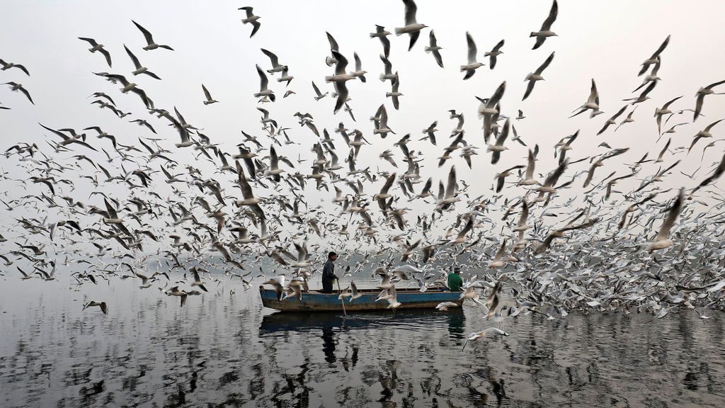 Los hombres alimentan gaviotas a lo largo del río Yamuna en una mañana de niebla en Nueva Delhi, India