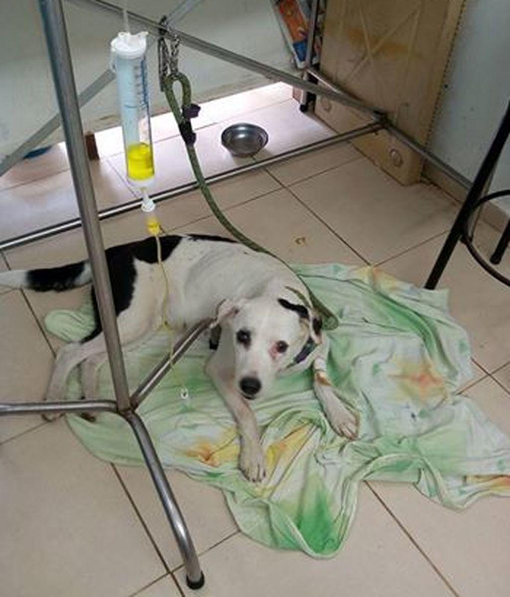 Una perrita abandonada en un aeropuerto muere de pena esperando a sus dueños
