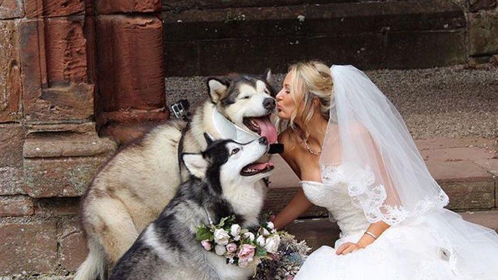 Deciden que sus perros les acompañen el día de su boda como… ¡damas de honor!