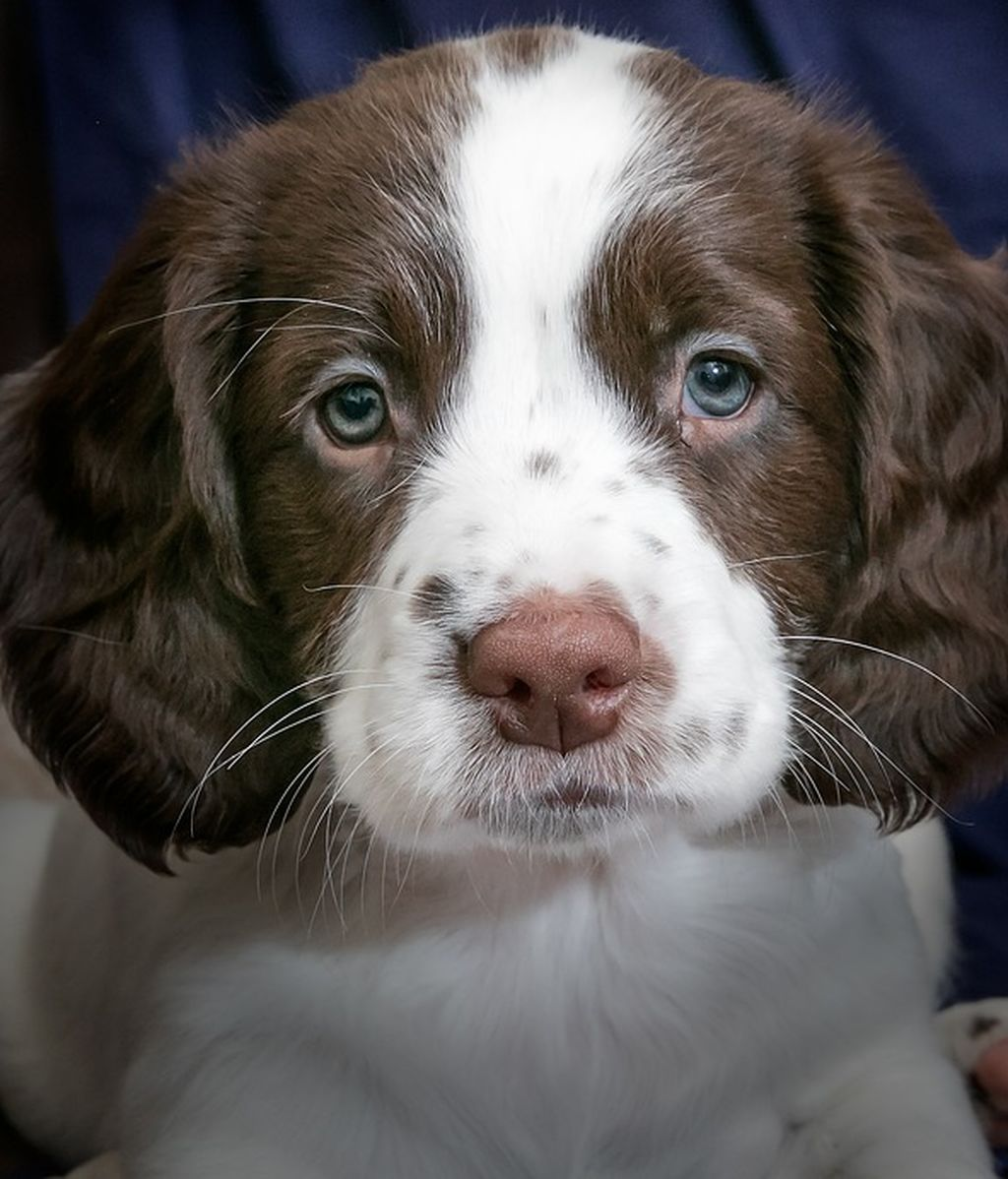 puppy-2940583_960_720