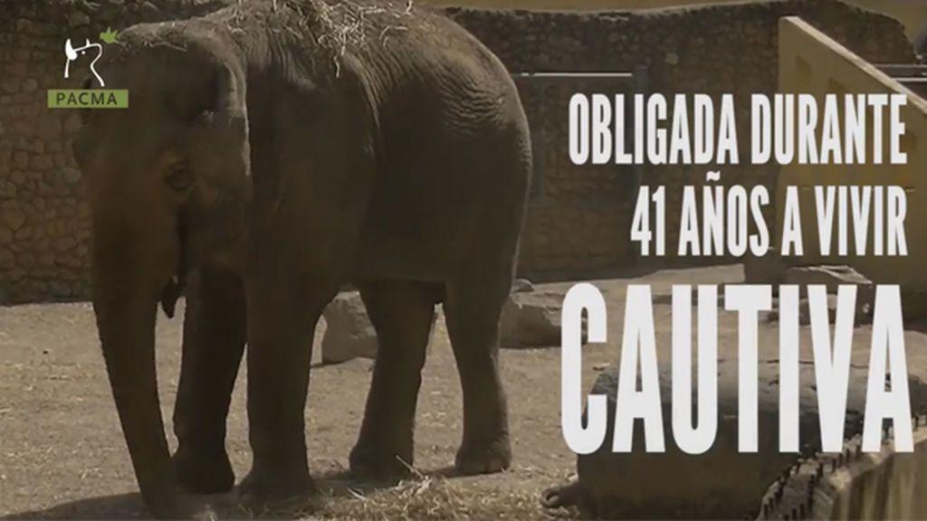 Flavia, la elefanta más triste del mundo