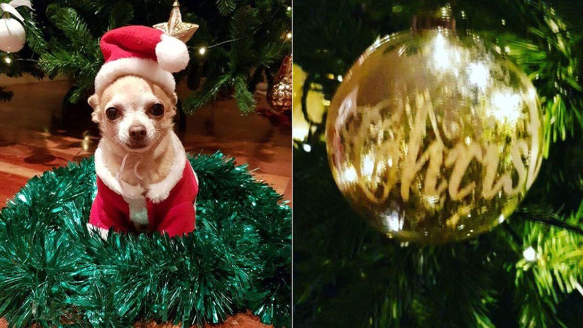 Su perrito Mowgly de Papá Noel y bien de dorado: La Navidad ha llegado a casa de Paula Echevarría y Daniela