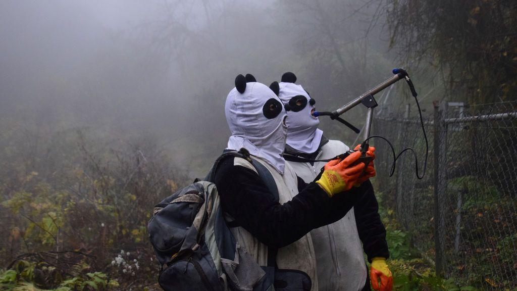 Los trabajadores que usan máscaras panda usan un dispositivo inalámbrico para detectar la ubicación de Yingxue, un panda que ha recibido entrenamiento de supervivencia, en una base de protección antes de reintroducirlo en la naturaleza, en Wolong, provincia de Sichuan, China
