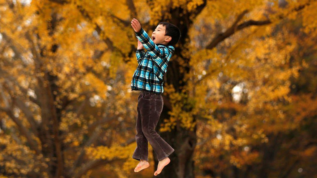 Un niño de seis años juega frente a hojas amarillas de ginkgo en un parque en Tokio, Japón
