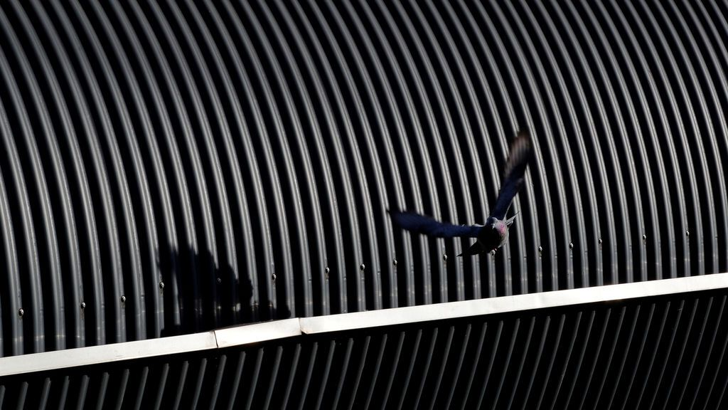 Una paloma alza el vuelo desde la estructura de un tejado