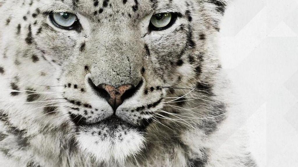 Reto visual: ¿encuentras al leopardo?