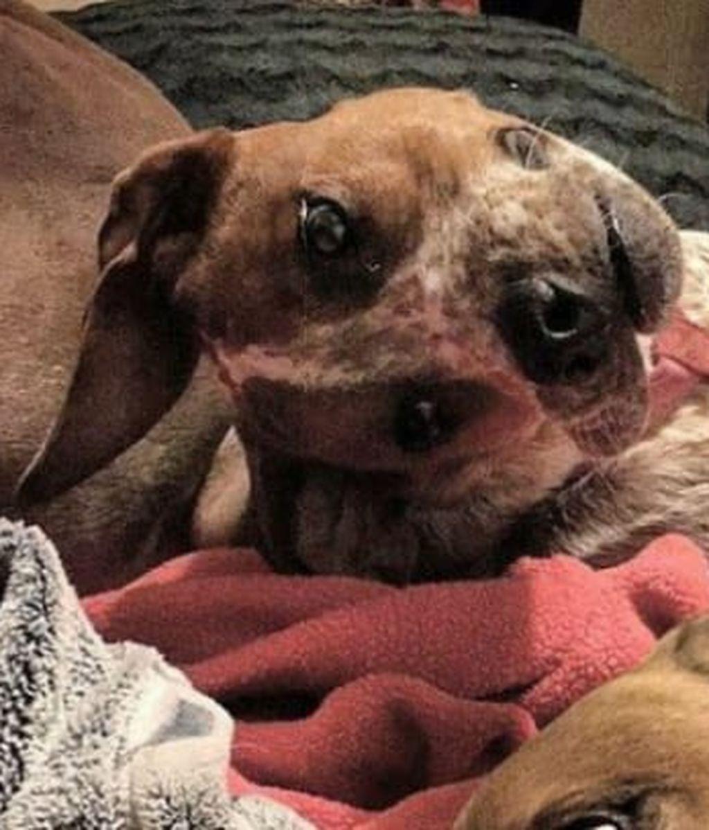 La foto de este perro se ha convertido en viral