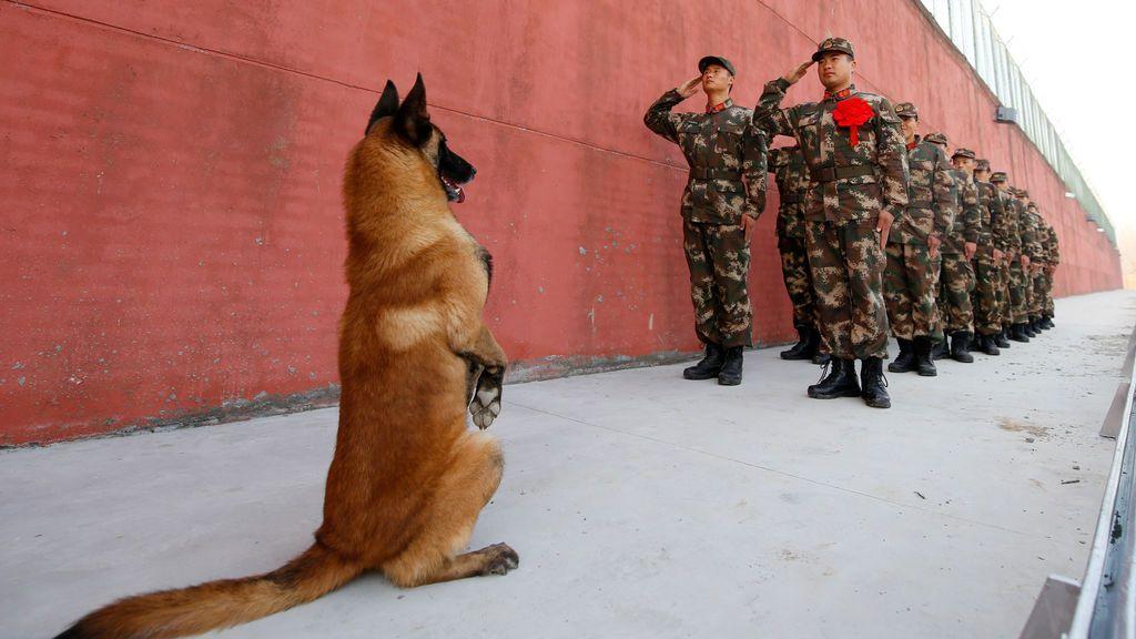 Un perro del ejército se levanta mientras los soldados se retiran saludando su guardia antes de la jubilación en Suqian, provincia de Jiangsu, China