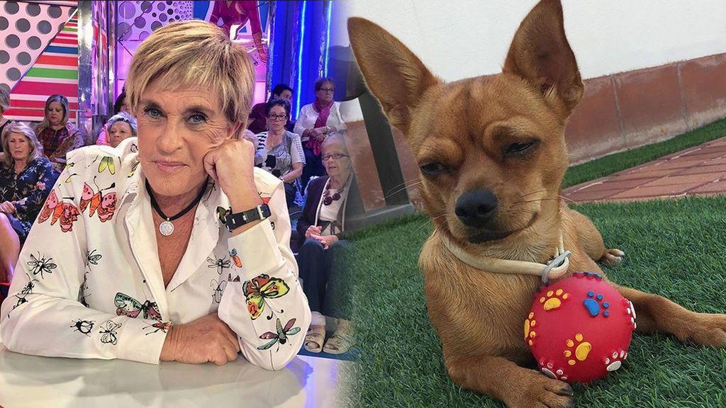 Así es el día a día de Maggy, la adorable perrita de Chelo García-Cortés
