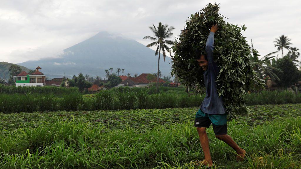 Un agricultor lleva a cabo la cosecha fresca de un campo mientras el volcán Monte Agung arroja humo y cenizas, cerca de Amed, Karangasem Regency, Bali, Indonesia