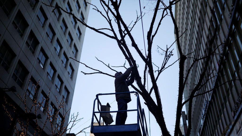Un hombre trabaja en un árbol en el distrito comercial de Myeongdong en Seúl, Corea del Sur