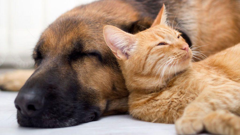 Los perros son más inteligentes que los gatos, lo dice la ciencia