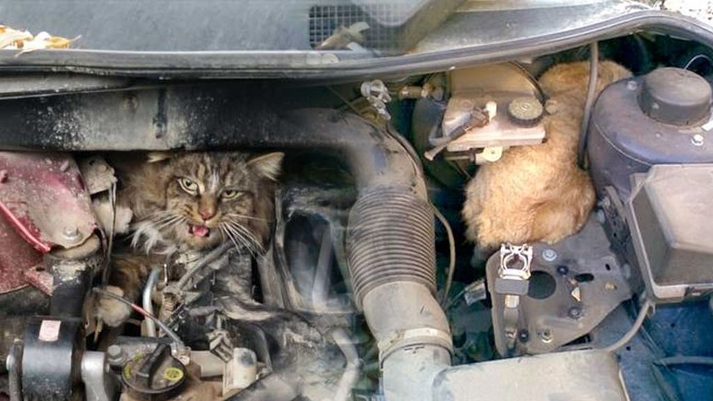 El truco facilísimo que da la Policía para salvar a los gatos que con este frío se colarán en tu coche