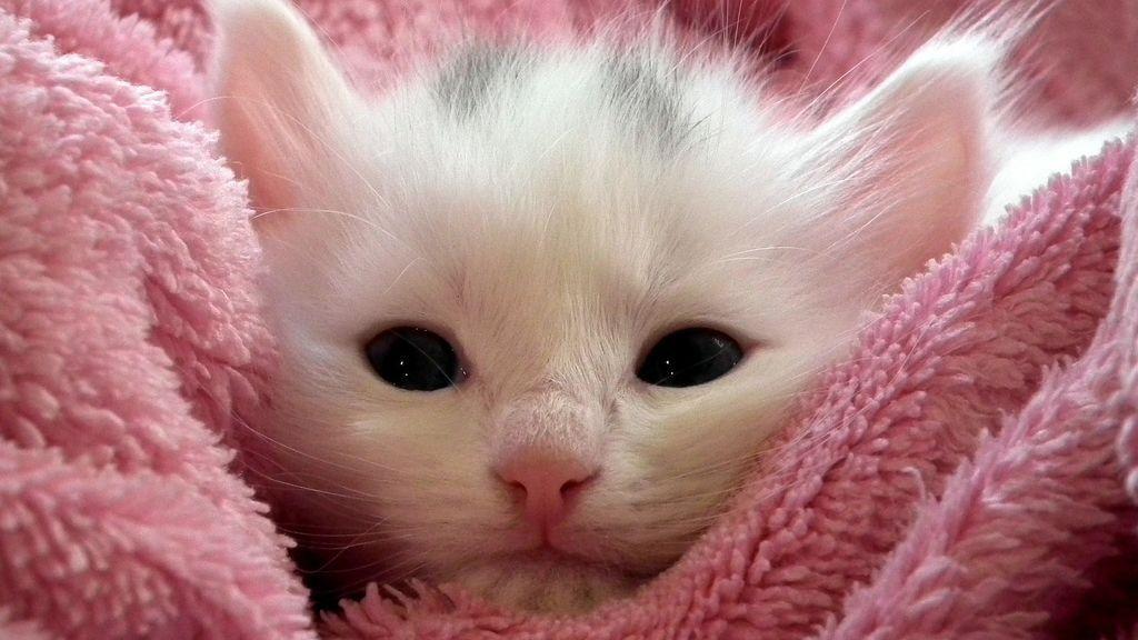 kitten-227011_1920