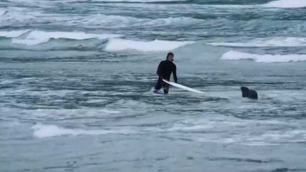 ¡Por los pelos! Dos surfistas logran escapar de dos leones marinos tras una increíble persecución