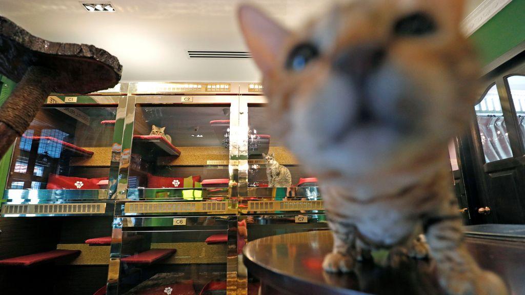 Un gato en un hotel de lujo