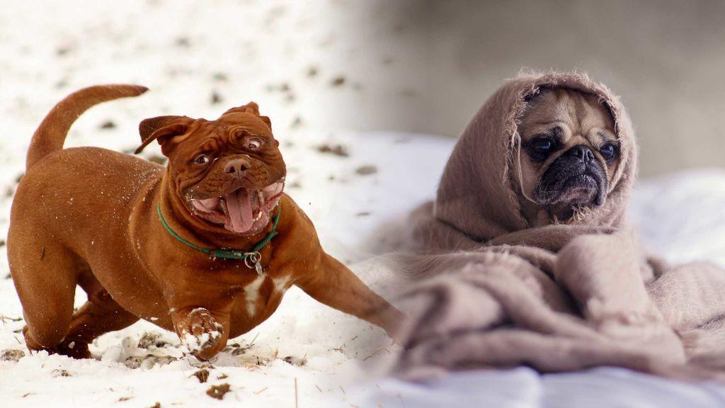 ¿Eres frío liker o frío hater? ¡A jugar!