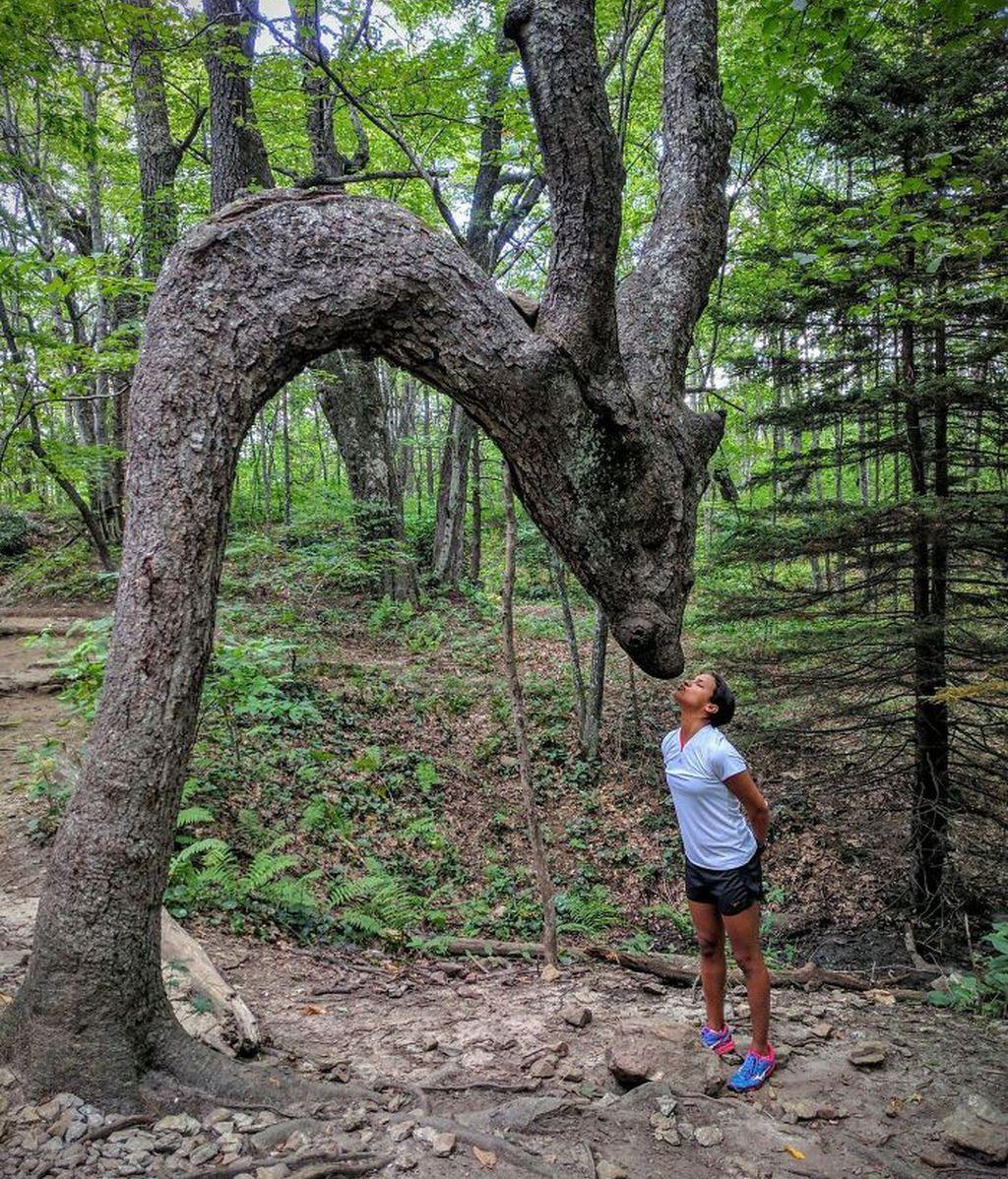 Increíbles ejemplos de pareidolia en árboles
