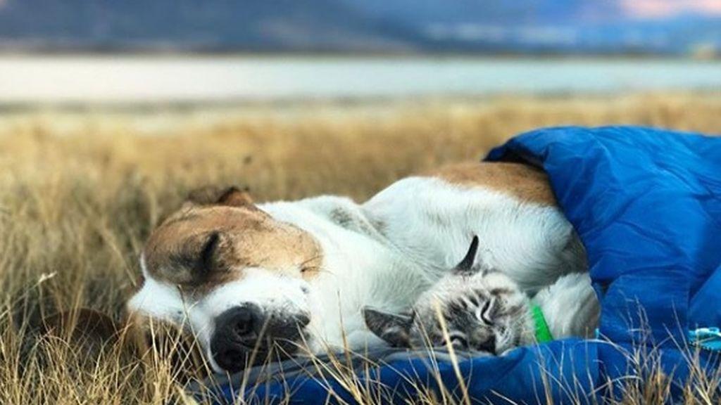 Perro y gato, compañeros inseparables de viaje