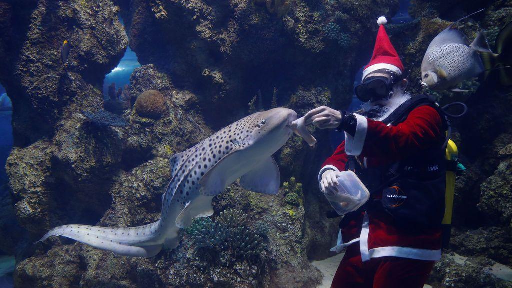 Un buzo vestido como Santa Claus alimenta peces dentro de una pecera en el Acuario Nacional de Malta en Qawra, Malta