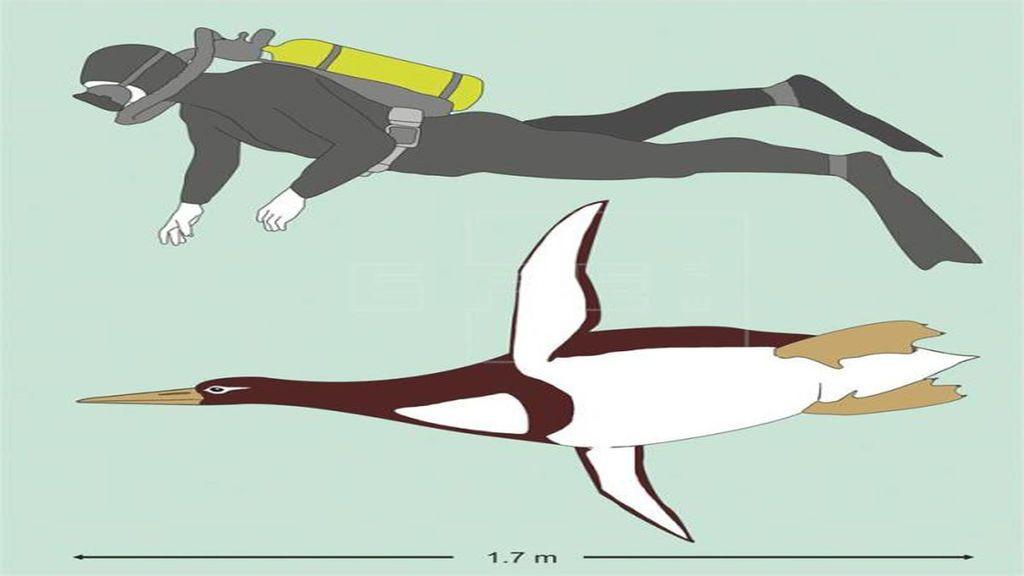 Descubren una espacie de pingüino gigante que vivió hace 60 millones de años
