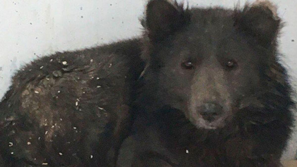 Un 'perroso' confunde a los rusos: por fin descubren qué animal es