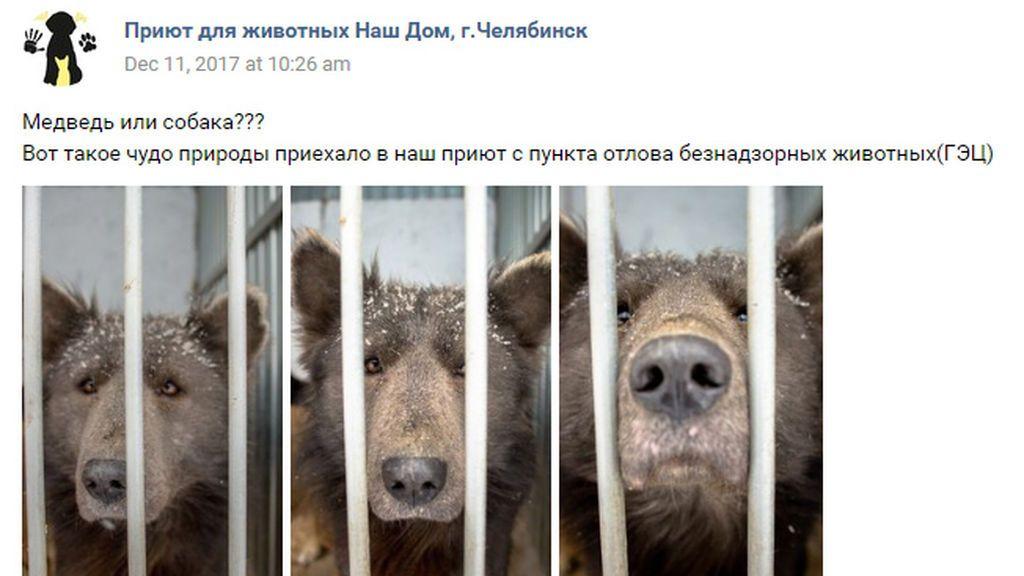 ¿Perro u oso?