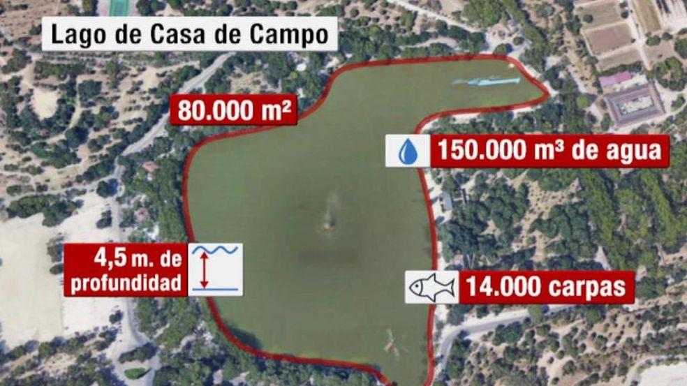 Por qué van a ser exterminadas las 14.000 carpas del lago de la Casa ...