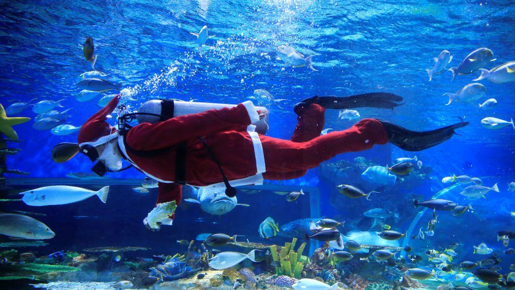 Un buceador profesional vestido como Santa Claus nada en un enorme acuario dentro de un Ocean Park en Manila, Filipinas
