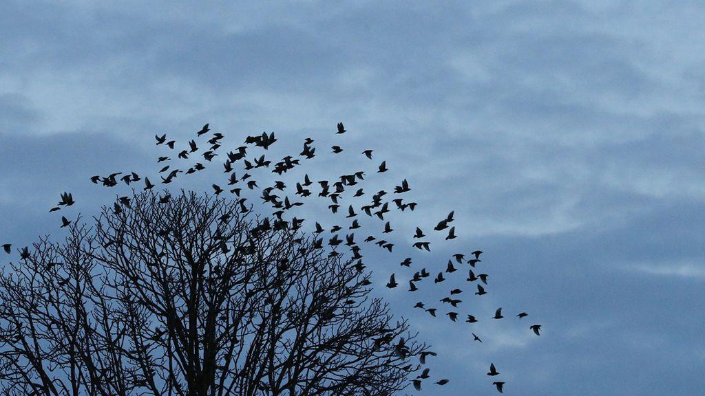 Pinchos en las ramas de los árboles para que los pájaros no defequen sobre los coches