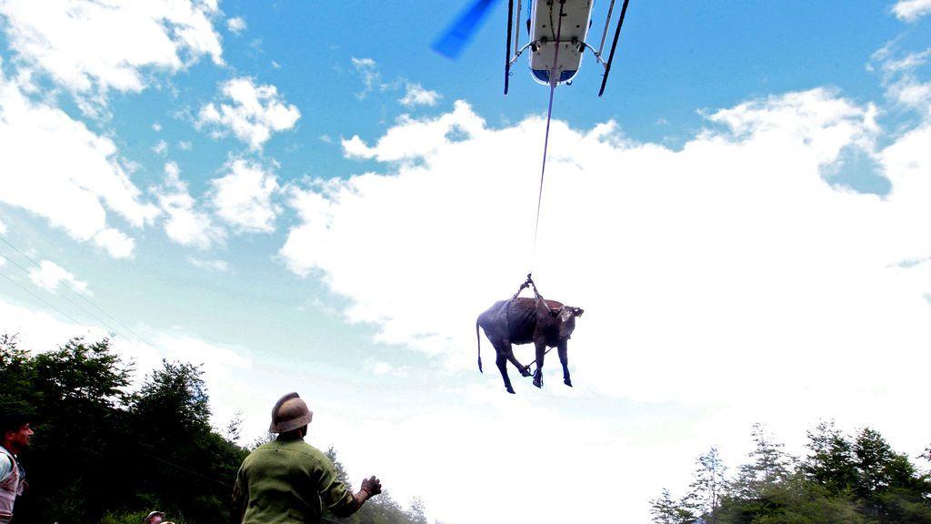 Una vaca es transportada por un helicóptero después de un alud de barro en Villa Santa Lucía, Chile