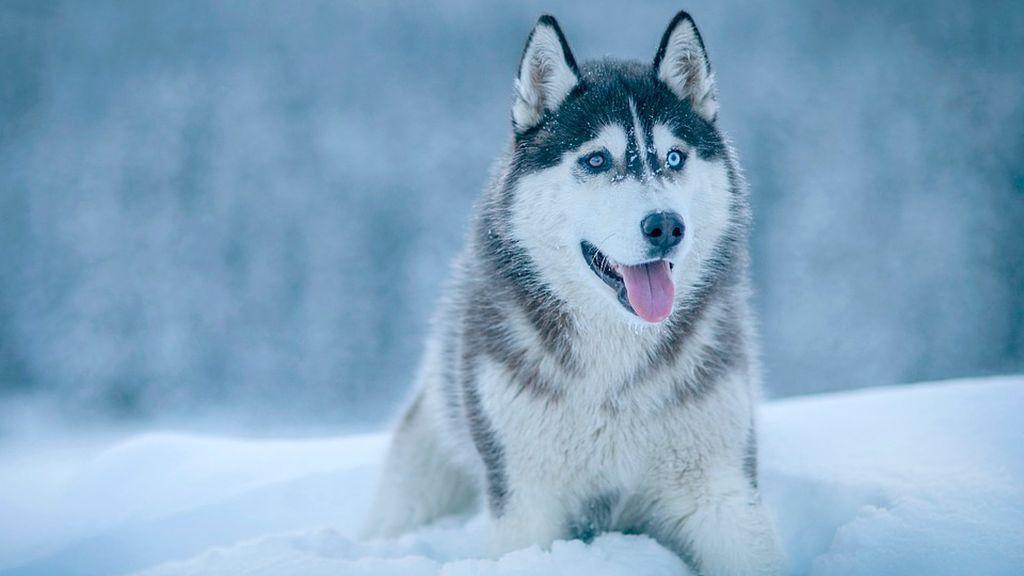 dog-2584189_960_720
