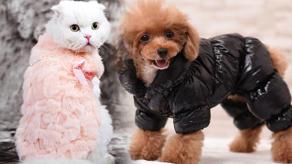 ¿Debemos abrigar a nuestras mascotas? Argumentos a favor y en contra: ¡vota!